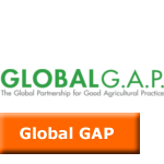 global_gap_icon2