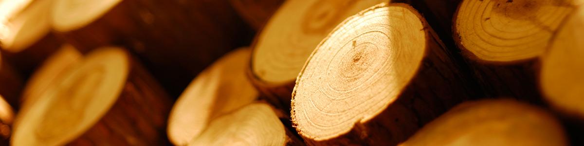 Está em desenvolvimento uma nova norma para a rastreabilidade da madeira a fontes sustentáveis