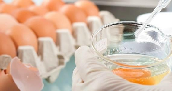 ISO teste microorganismos