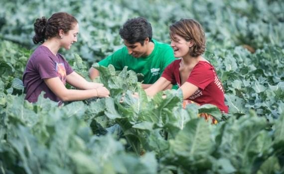 agriculturasustentável