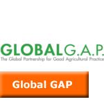 global_gap_icon2